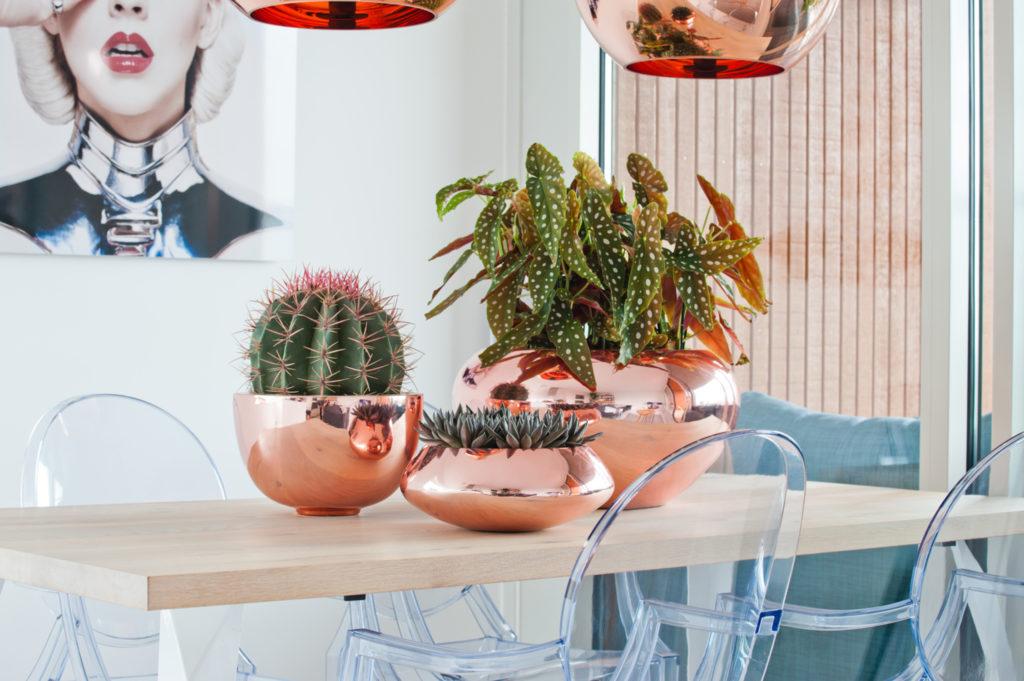 Plantes cactus en pots cuivre