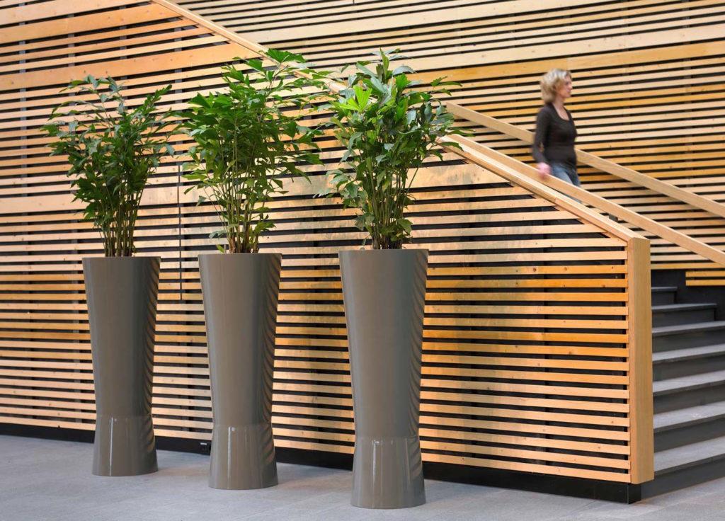 Plante Caryota palmier en pot dans une entreprise à Paris