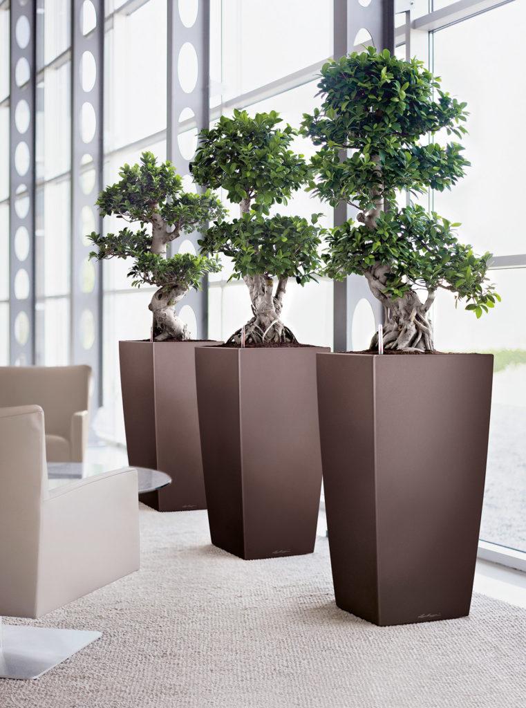 Plantes Bonzaï en pots noirs