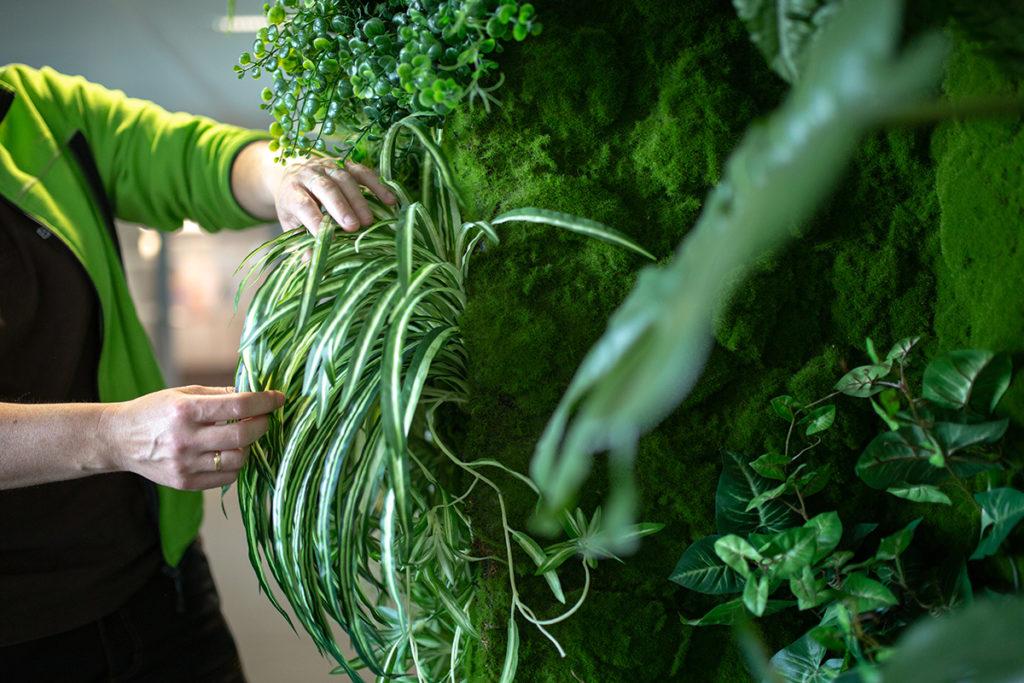 nettoyage plante mur végétal