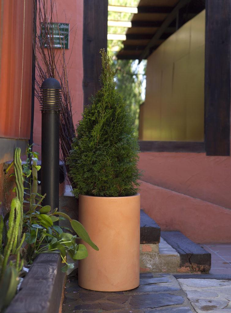 Plante Cyprès en pot sur terrasse