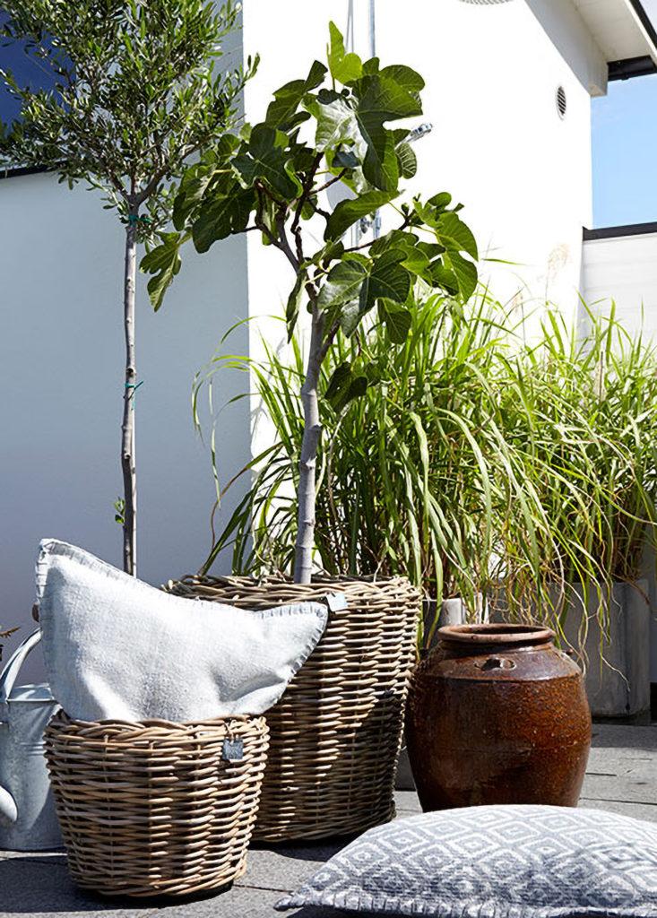 plantes de terrasse dans des pots en osier