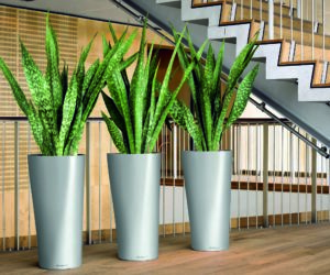 Entretien régulier des plantes en entreprise