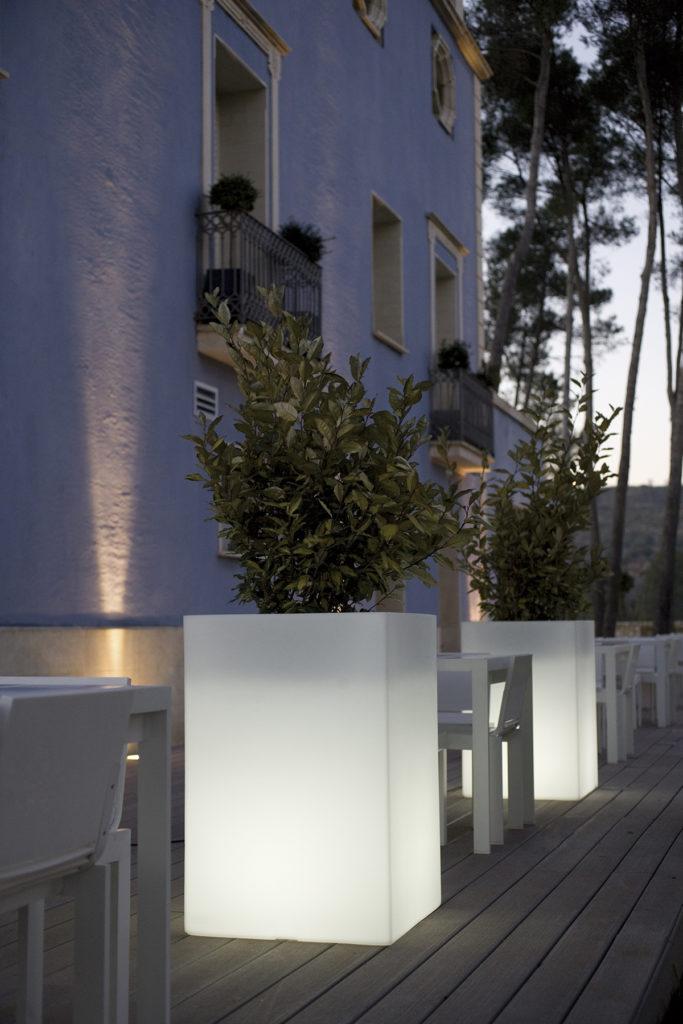Plantes Eleagnus en pots lumineux sur terrasse bois