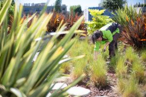 Entretien des plantes d'une terrasse d'entreprise à Paris