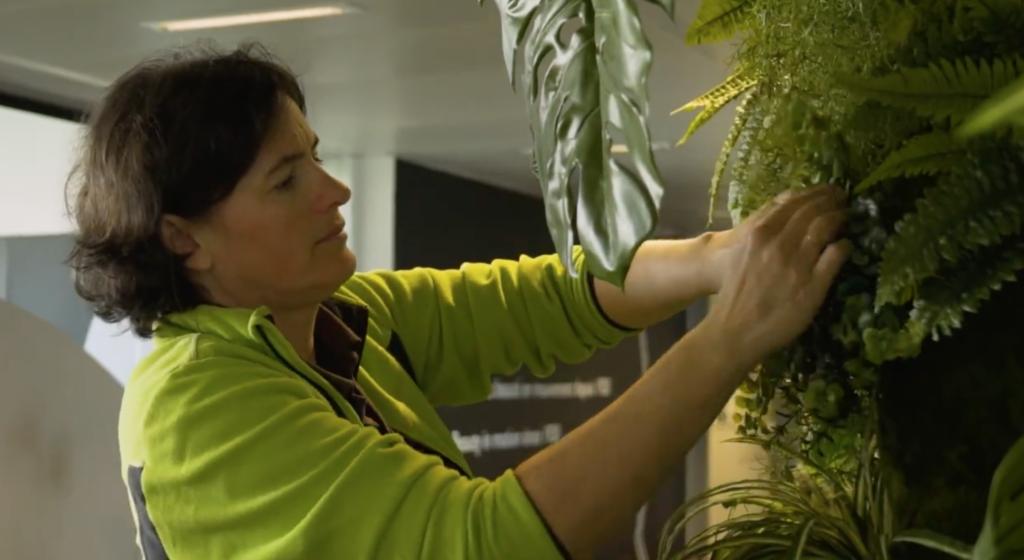 Entretien d'un mur végétal dans des bureaux à Paris