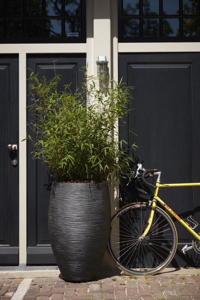 Bambou en extérieur en pot noir strié