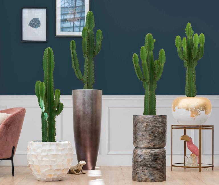 Cactus en pots dans des bureaux en entreprise