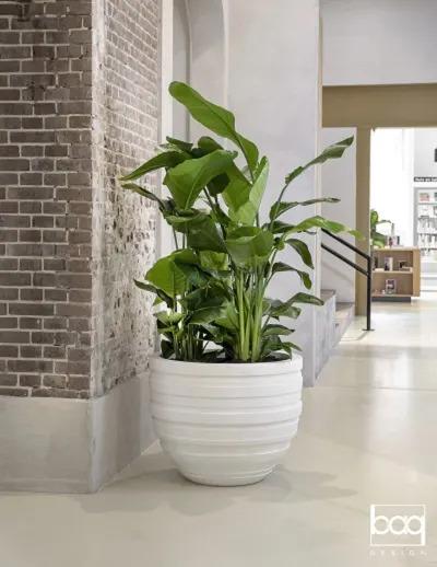 Plante en pot en hall d'entreprise