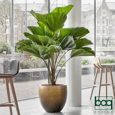 Plante en pot doré dans un restaurant d'entreprise