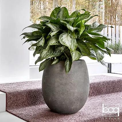 Plantes en pots noir sur des marches d'entreprise