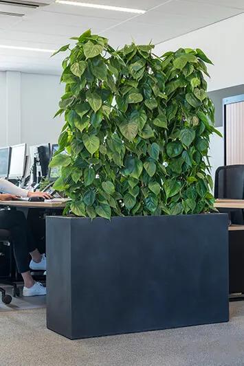 Plantes en bac pour séparation de bureaux