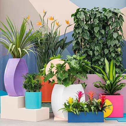 Plantes en bacs originaux colorés