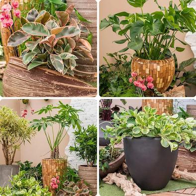 Plantes originales pots originaux