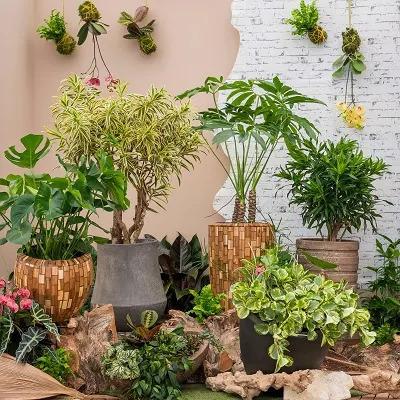 Plantes originales pour décoration d'intérieur