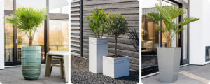 Plantes en pots blanc sur une terrasse d'entreprise