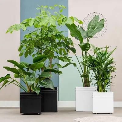 Plantes dans des pots carrés en entreprise