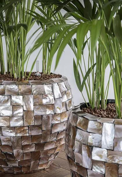 Plantes en pots originaux bureaux d'entreprise