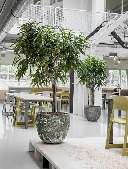 Plantes en pot dans un restaurant d'entreprise
