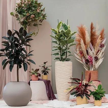 Plantes en pot dans un salon
