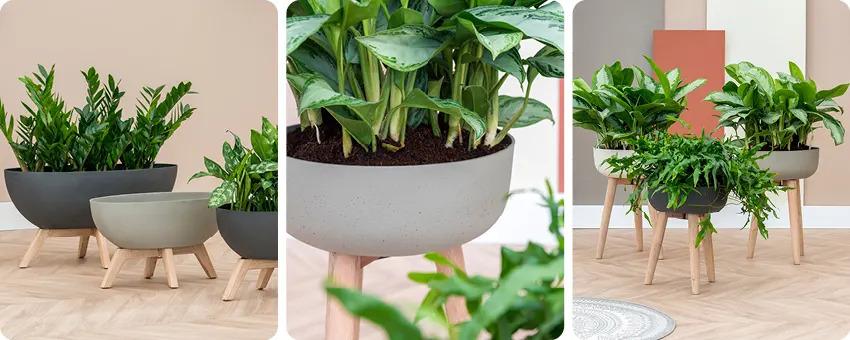 Petites plantes en pots sur pieds en bois