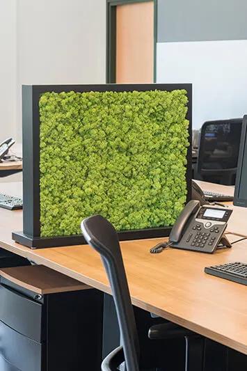 Tableau végétal pour séparation bureaux d'entreprise