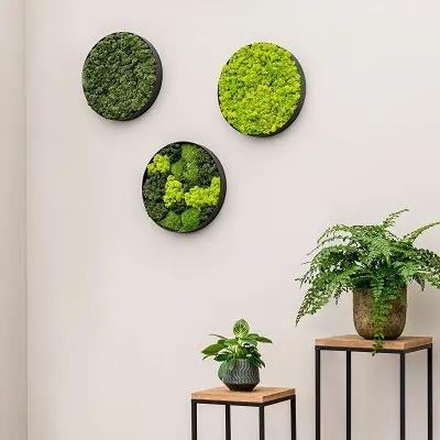 Tableaux végétaux sur mur d'entreprise