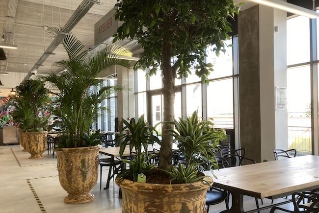 Aménagement de plantes dans un restaurant d'entreprise