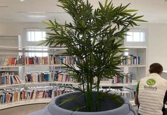 Plante Bambou artificiel dans une bibliothèque d'entreprise