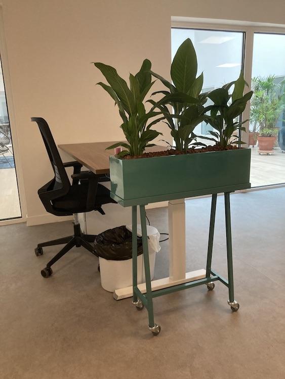 Jardinière mobile avec une plante Spathiphyllum