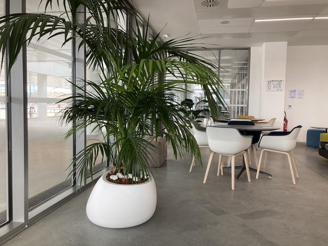 Plante Kentia dans un pot blanc dans un salon d'entreprise