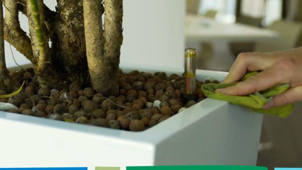 Nettoyage d'un bac de plante d'intérieur