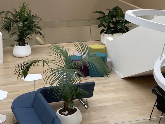 Aménagement de plantes en Atrium