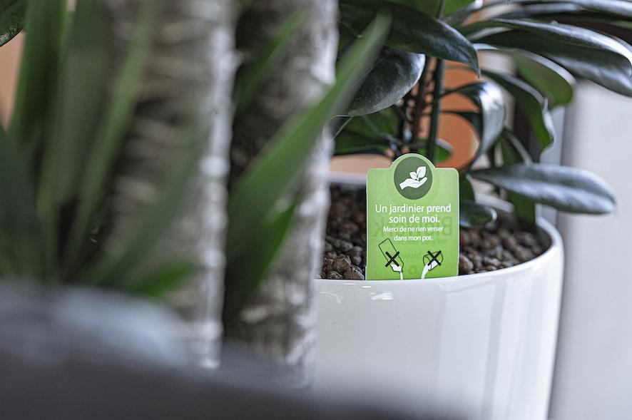 Étiquette d'entretien d'une plante d'intérieur