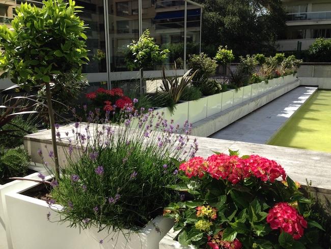 Séparation de terrasse avec des plantes fleuries