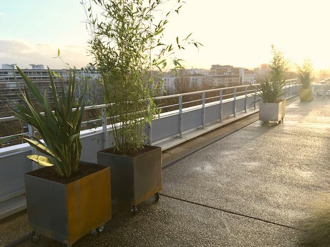 Terrasse d'entreprises avec des plantes dans des bacs carrés